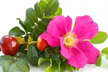 La verdadera acción del aceite de rosa mosqueta: el antiedad perfecto